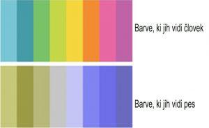 Spekter barv, ki ga vidijo psi