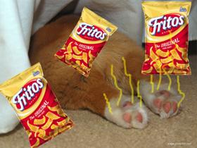 Frito Feet – vonj pasjih tačk po kokicah