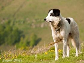 Pomoč, ko se pes izgubi