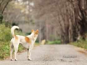 Izgubljen pes