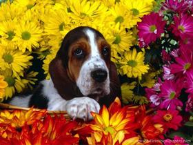 Kako vidijo psi barve