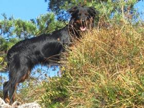 V hribe ali gore s psom
