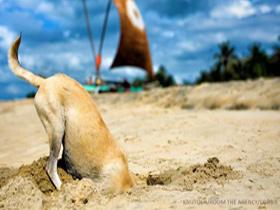 Zakaj pes zakoplje kost?