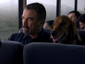 Prevoz psa z javnim prevoznim sredstvom