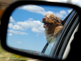 Pes v avtu in varnost psa