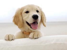 Prihod pasjega mladiča ali prvi nakupi za psa