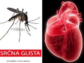 Dirofilaria immitis - Srčna glista; okužba z Dirofilariozo