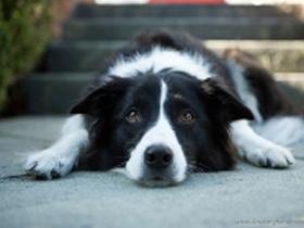 Osnovna Prva pomoč psu