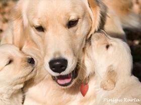 Kako, kdaj in koliko hraniti psa