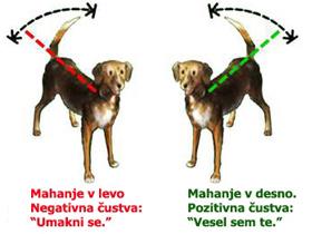 Mahanje pasjega repa v levo ali desno