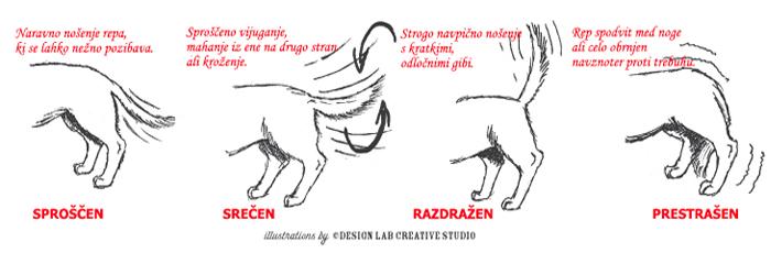 Sporočilo pasjega repa, pasja govorica