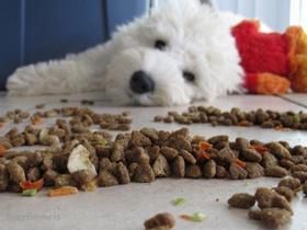 Briketi-suha ali mokra-konzervirana pasja hrana?