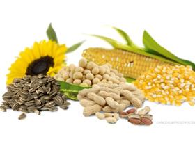 Zakaj omega 6 maščobne kisline v pasji prehrani?