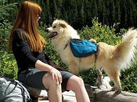 Pasji nahrbtnik; S psom v hribe