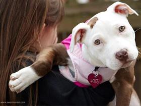 Pasji sluh – Kako pes sliši