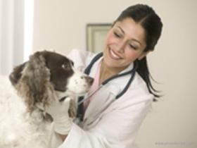 Cepljenje psa proti steklini