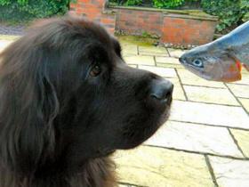 Pes in riba, Omega 3 maščobne kisline
