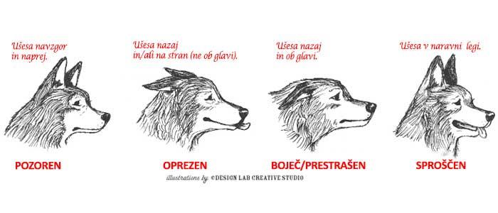 Kaj sporočajo pasja ušesa?