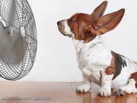 Govorica pasjih ušes. Kaj pove?