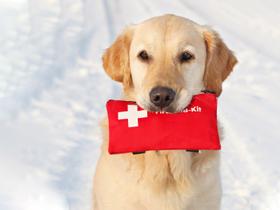Torba prve pomoči za psa