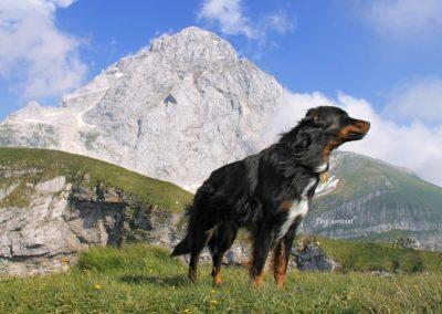 Mangart, gora, Pasji horizont