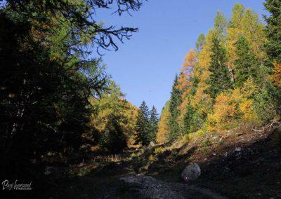 Smokuška planina, macesnov gozd