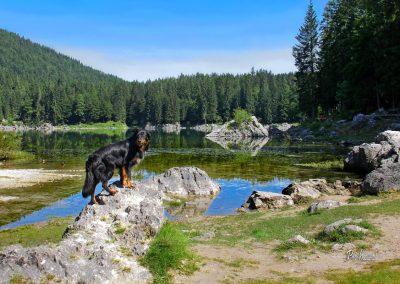 Jezero Predel