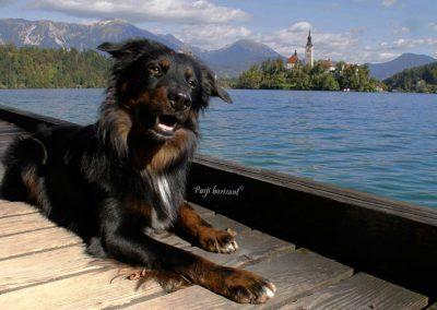 Izlet Sprehod ob Blejskem jezeru