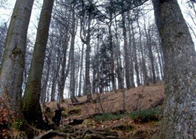 Blegoš, začetek poti skozi gozd
