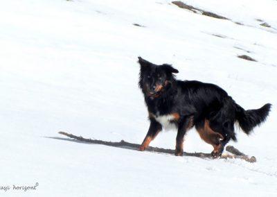 Dobrča, sneg, Pasji horizont