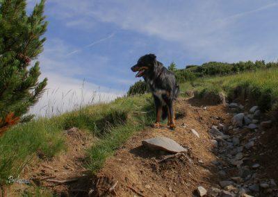 Dovška baba, malo naprej od planine Rožca, Pasji horizont