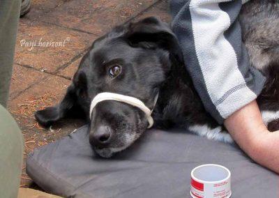 ERPS izobraževanje, Prva pomoč psu, 2016