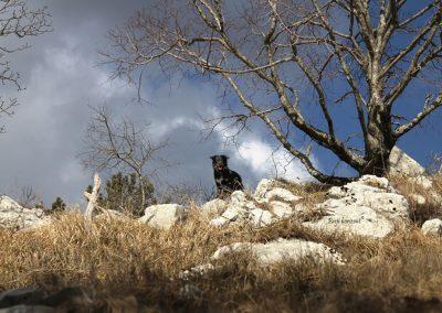 Pot na Golič iz Zazida, Pasji horizont
