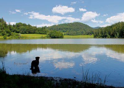 Gradiško jezero; pes stoji v jezeru