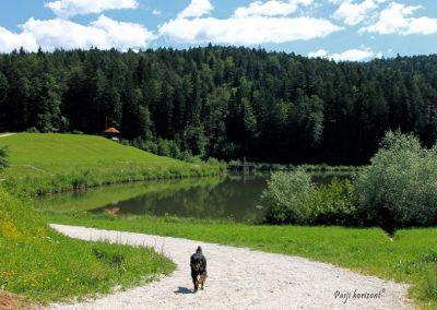 Gradiško jezero; pes na poti