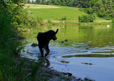 Pasji horizont, Gradiško jezero, pes v jezeru