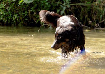 Pasji horizont, Gradiško jezero, pes v vodi