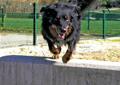 Pasji horizont, Izola, pes teče