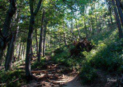 Pot na Javorjev vrh, gozd