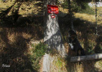 Pot na Bašelj, smerne table, klopca