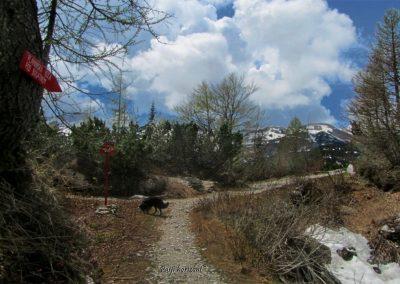 Razpotje, levo Dom na Komni, desno Planina pod Bogatinom