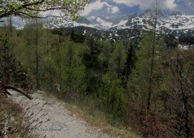 Pot na Planino pod Bogatinom