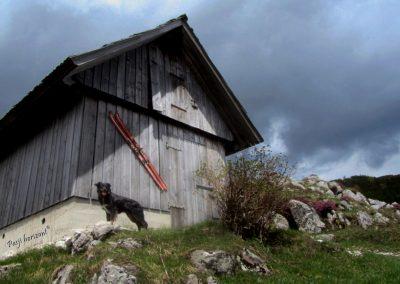 Planina pod Bogatinom, pastirska koča