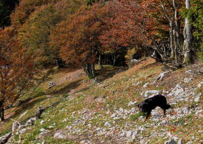 Kriška gora, pot proti Tolstemu vrhu