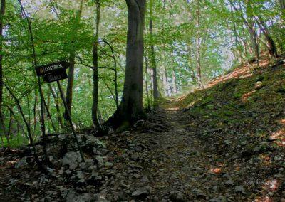 Ojstrica; gozd