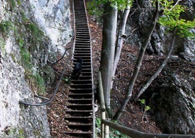 Izlet Ojstrica, stopnice