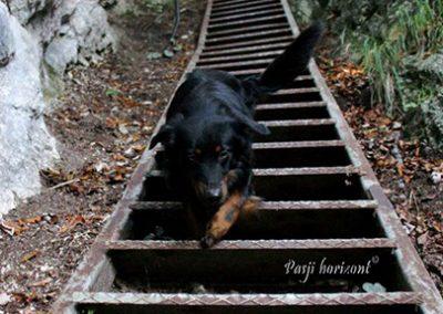 Izlet Ojstrica; strme stopnice