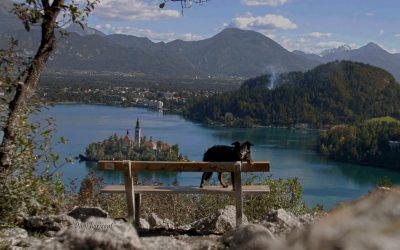 Ojstrica in Bled