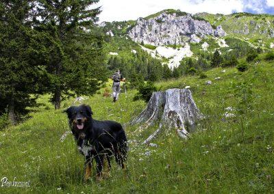 Planina Ilovica
