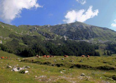 Planina Pungart